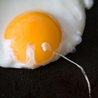 eggs0805s
