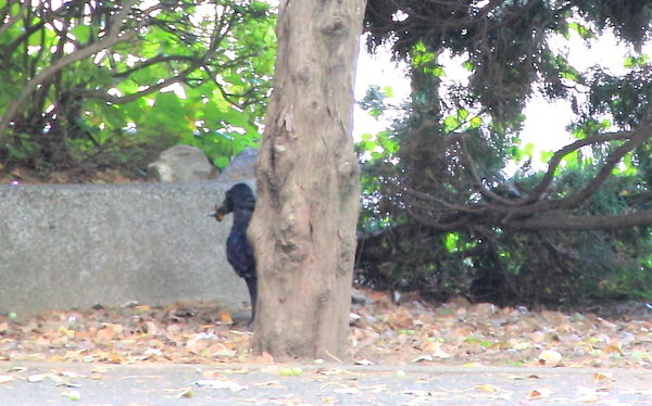 チャーミングなカラスに会いにいくなら、東京・上野公園への画像17